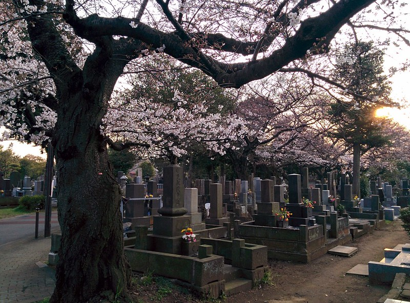 historical sites in Tokyo - cherry blossoms at Yanaka Cemetery - photo by Henry under CC BY 2.0