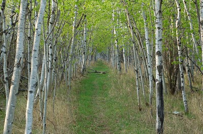 free things to do in Winnipeg - Assiniboine Forest path - photo by Dano under CC BY 2.0