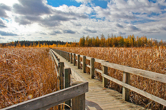 free things to do in Ottawa - Mer Bleue Bog Trail - photo by cjuneau under CC-BY-2.0